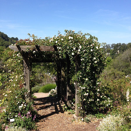 ... Botanic Garden At Tilden, So We Usually Go There Instead Of Trying Out  Other Places, So I Finally Got The Chance To See The UC Garden, And... Wow.